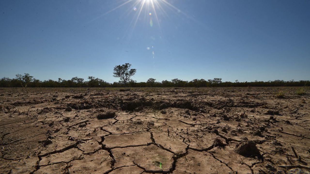 Frappée par la sécheresse, l'Australie va importer du blé pour la première en fois en dix ans
