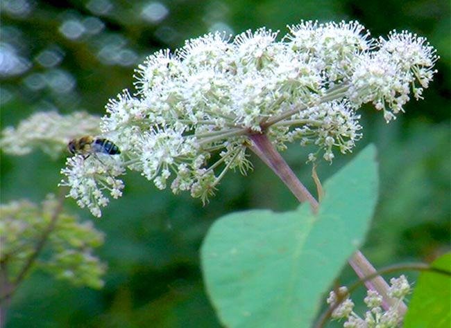 comment développer la biodiversité