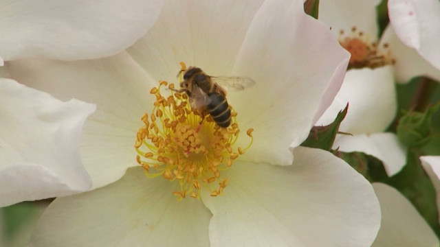 La pollinisation, comment ça marche et à quoi ça sert ?
