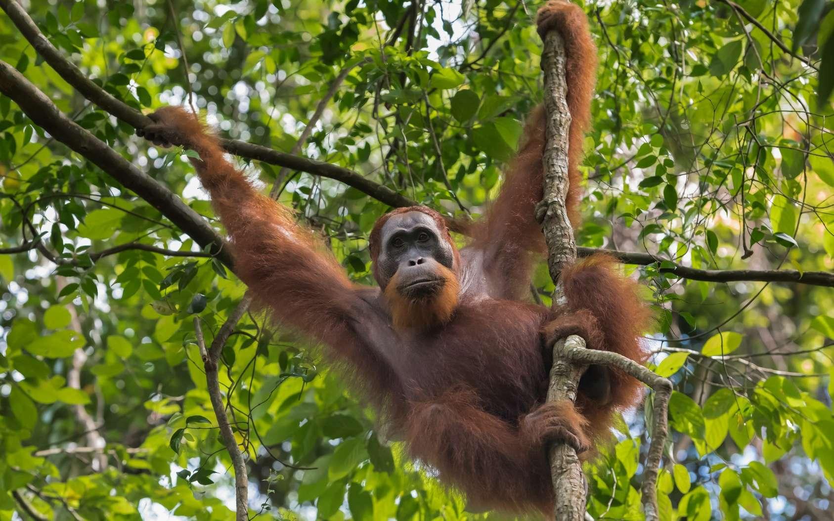 La crise de la biodiversité en 10 chiffres