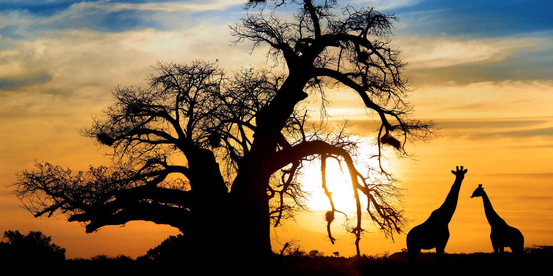 Le déclin massif de la biodiversité menace l'humanité