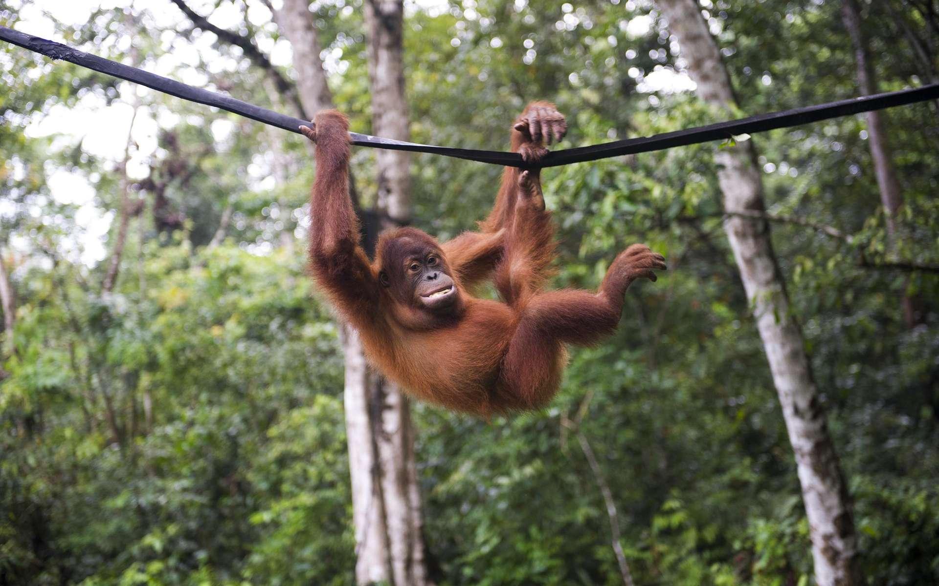Les scientifiques lancent un cri d'alarme : la disparition des espèces s'accélère