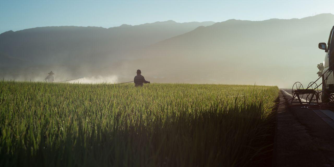 Un pesticide, qui vole en moyenne 2,5 points de QI chez l'enfant, toujours pas interdit