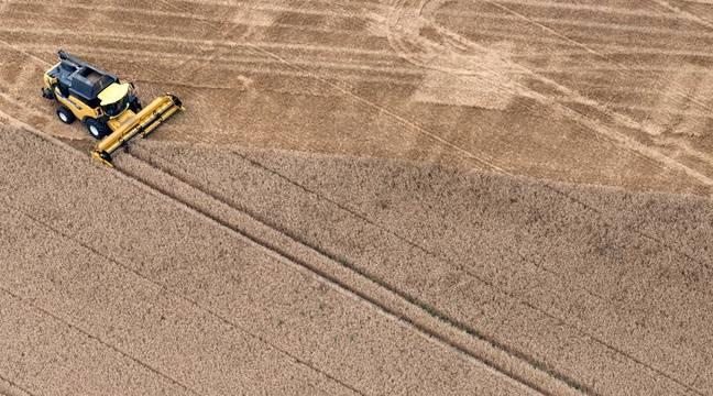 VIDEO. Pourquoi les insectes vont ravager les cultures agricoles