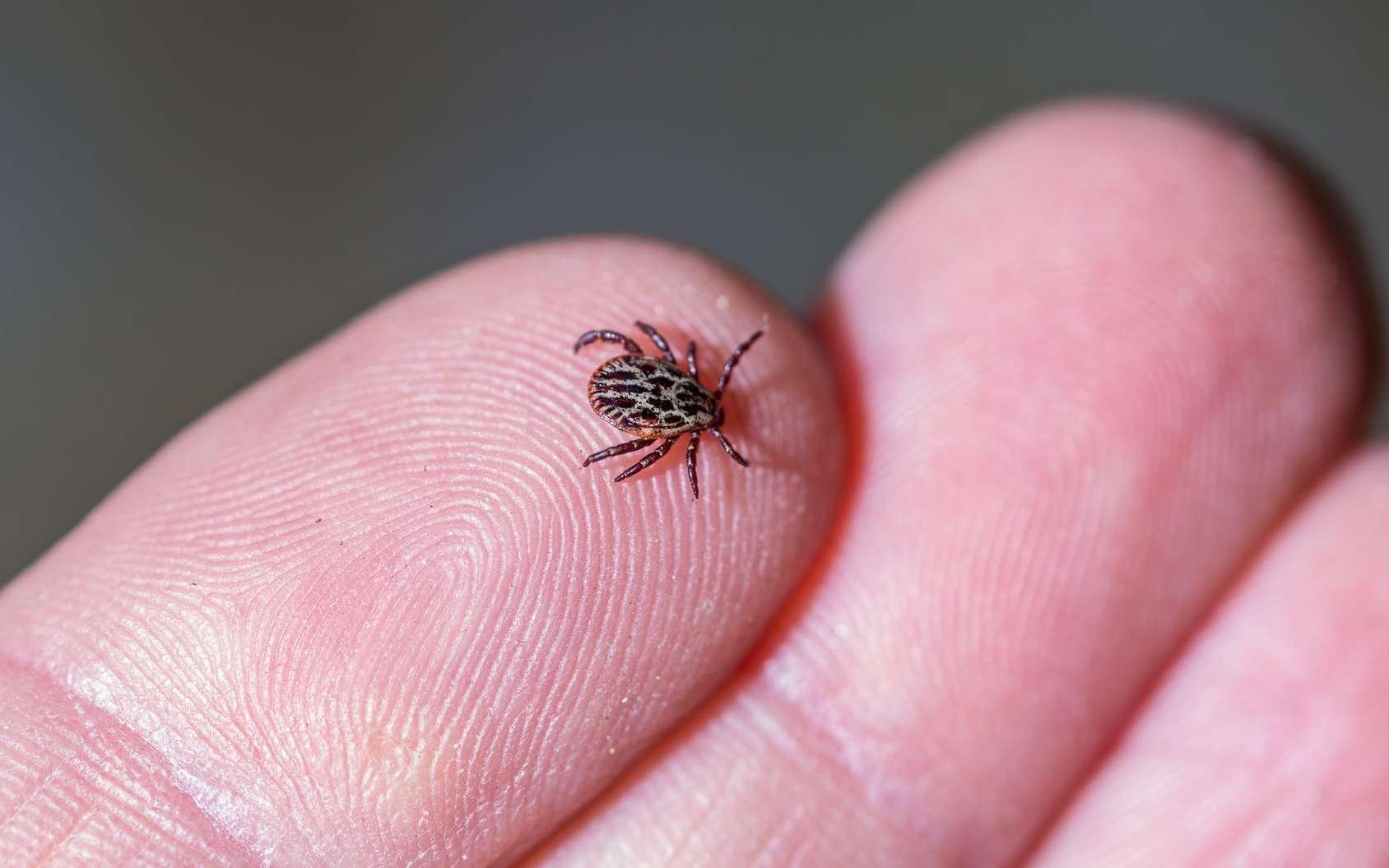 Maladie de Lyme : son incidence va augmenter avec le réchauffement climatique