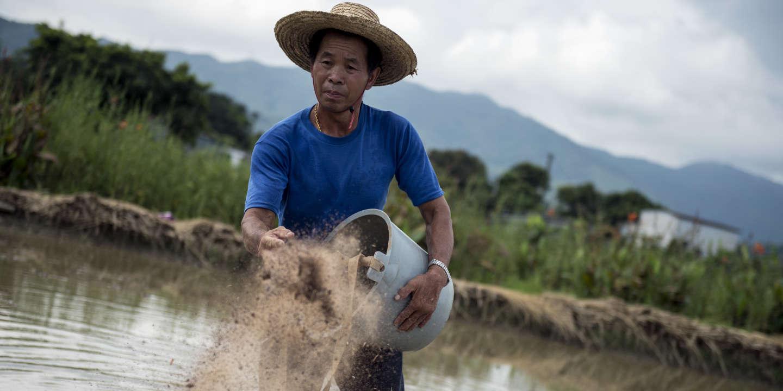 Une agriculture 100% biologique pourrait nourrir la planète en2050