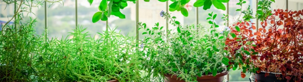 Agriculture urbaine et villes comestibles : l'avenir est-il sur les toits ? - consoGlobe