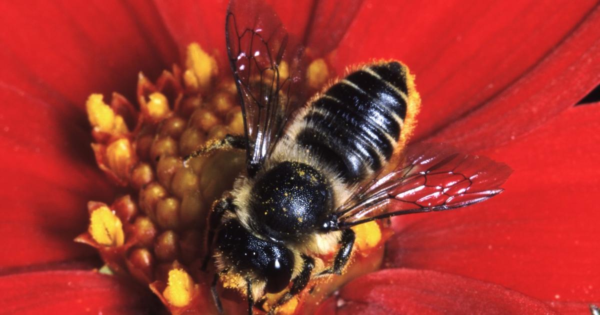 Les pesticides, tueurs d'abeilles ?