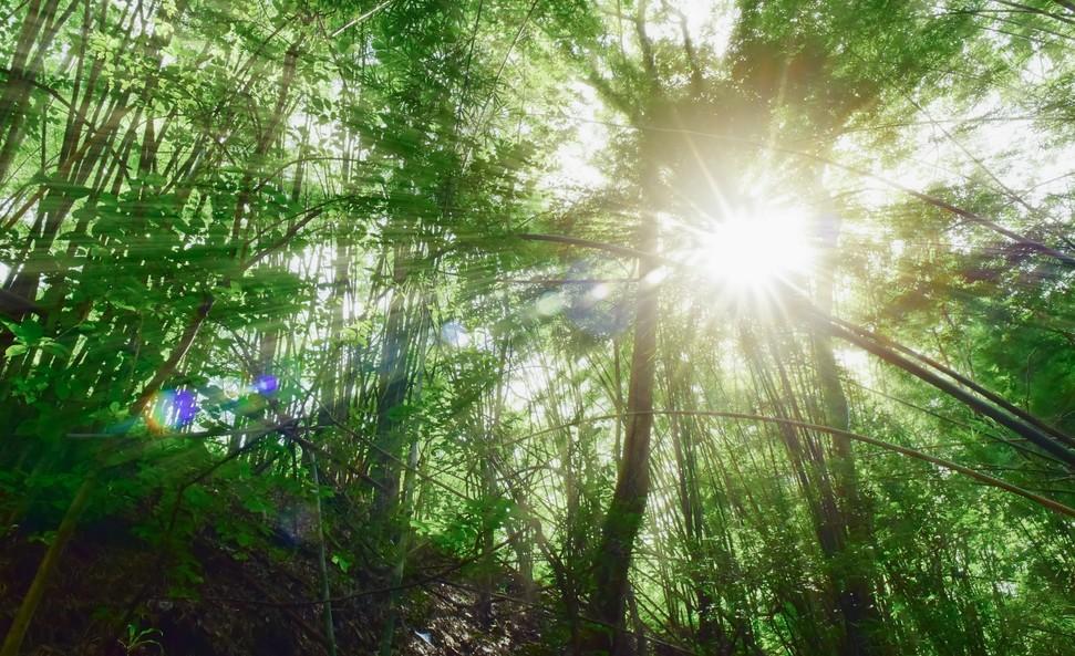 Et si la vraie urgence écologique, c'était la disparition de la biodiversité ?