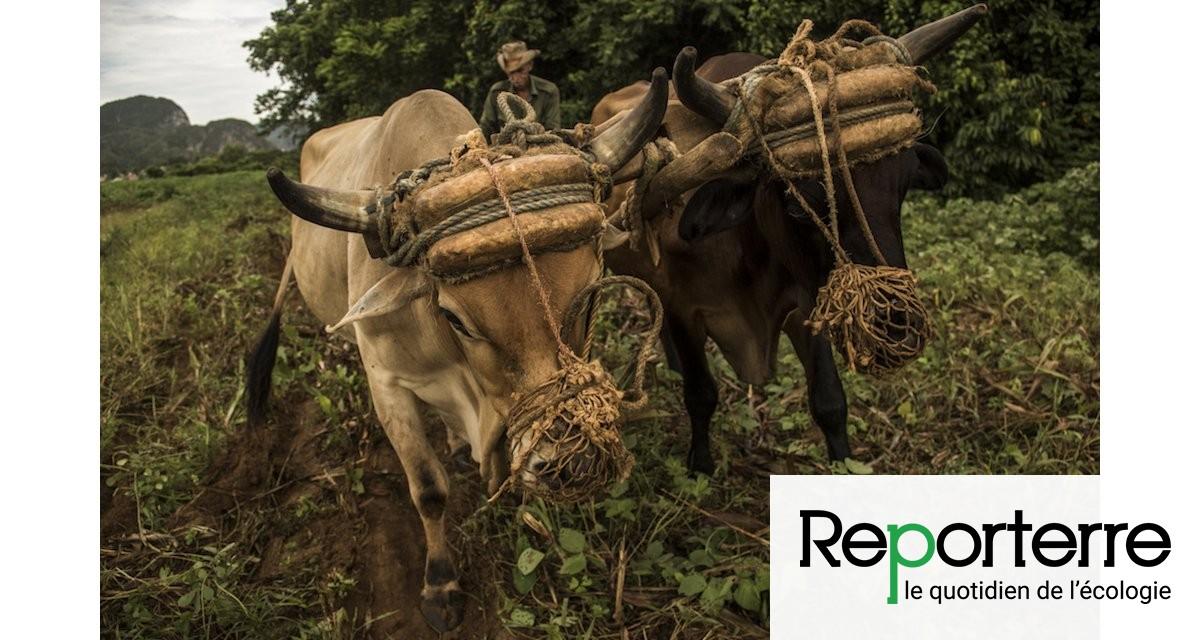Cuba, le pays de l'agriculture biologique