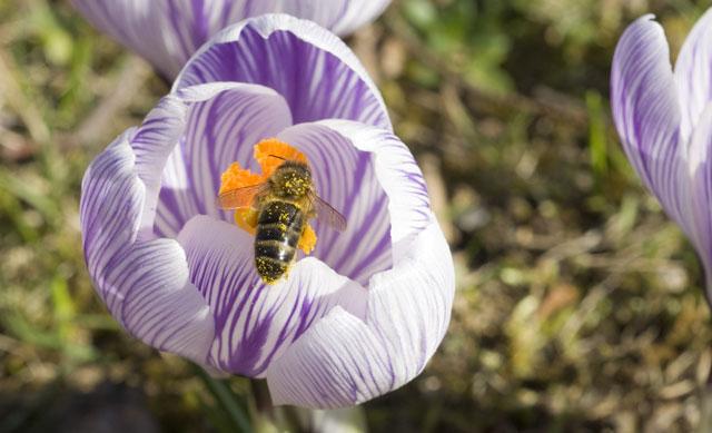 Comment aider les pollinisateurs du jardin : conseils