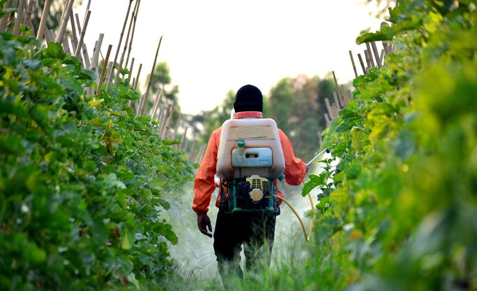 Faut-il interdire le glyphosate de Monsanto ?