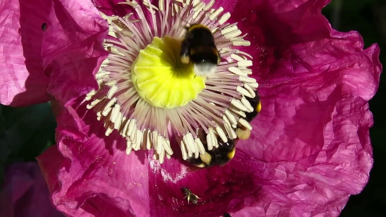 Aider les insectes et les oiseaux au jardin : et si on s'y mettait!