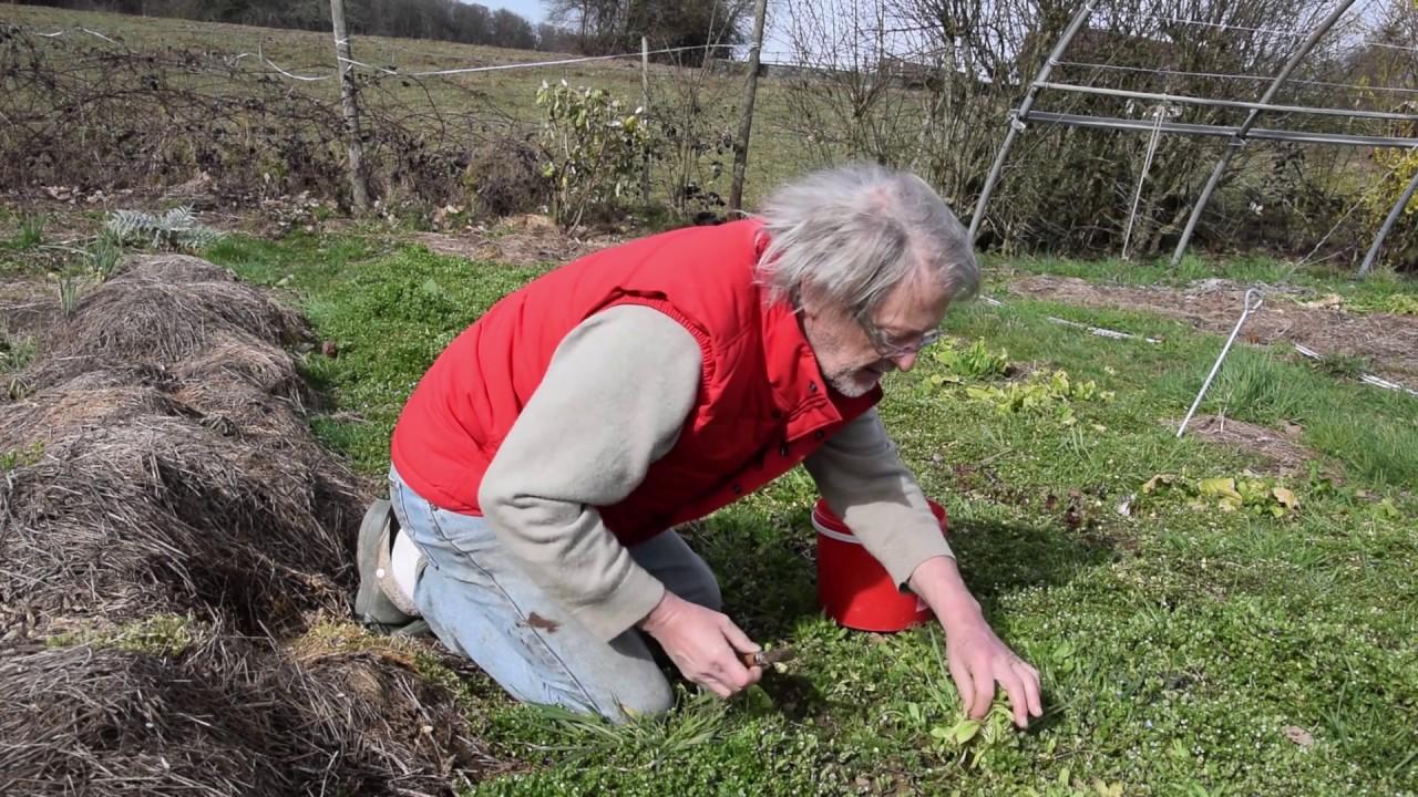 jardins nourriciers sans labour
