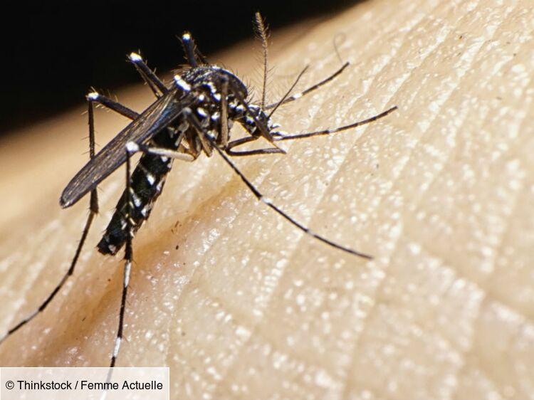 Moustiques tigres : 5 infos indispensables pour mieux s'en protéger