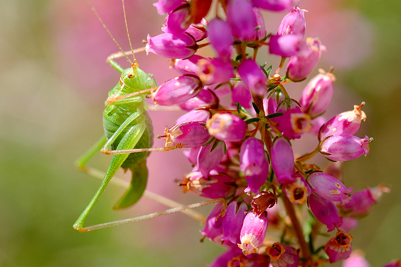 La biodiversité : présentation et enjeux