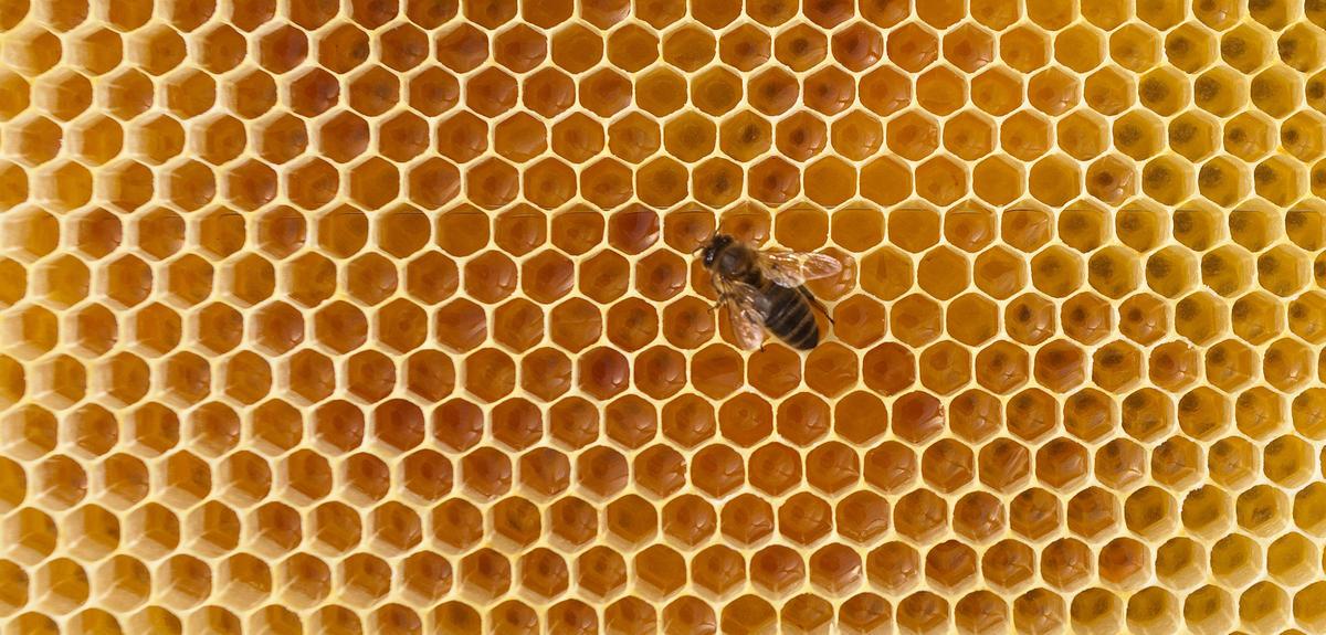 Pourquoi les abeilles disparaissent