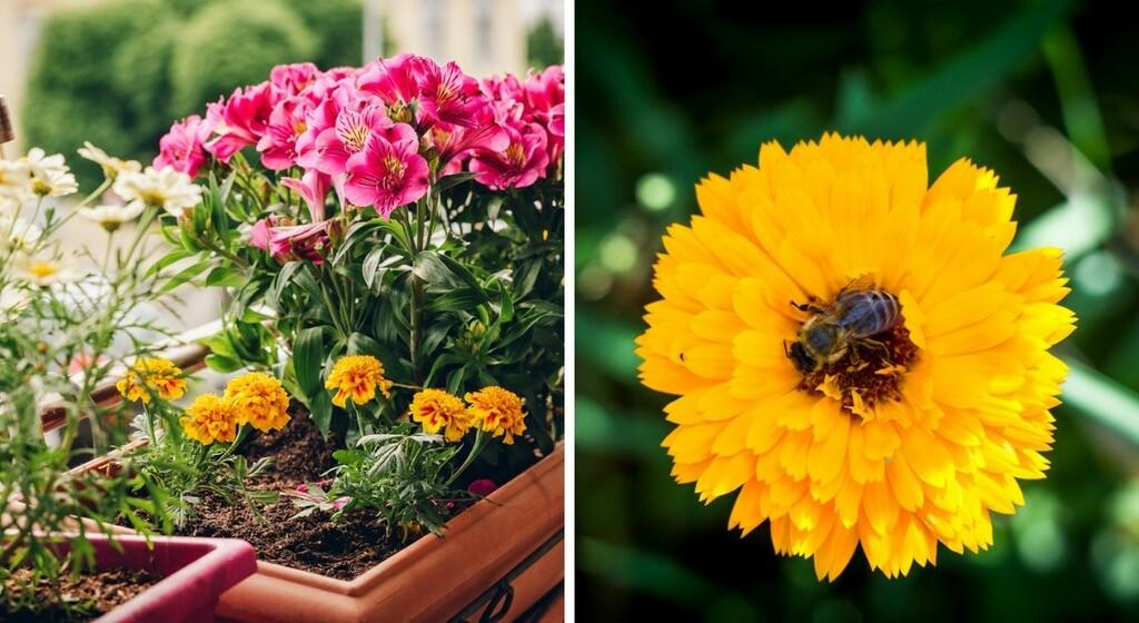 Jardiner en ville: 17 plantes mellifères à cultiver dans sa jardinière pour les abeilles
