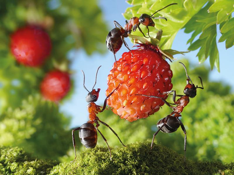 BIOLOGIE — L'assourdissant été : les insectes et le changement climatique - FICSUM   Fonds d'investissement des cycles supérieurs de l'Université de Montréal