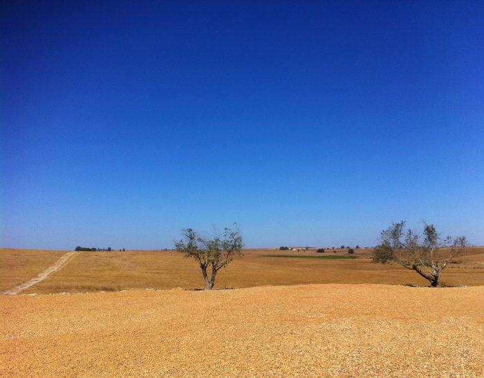 Le réchauffement va aggraver le risque de sécheresses dans certaines régions