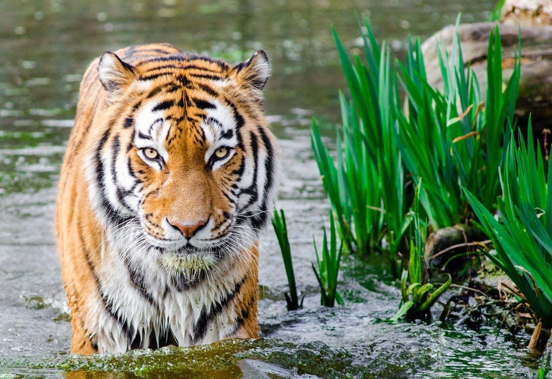 La crise de la biodiversité menace l'Humanité | L'Odyssée de la Terre