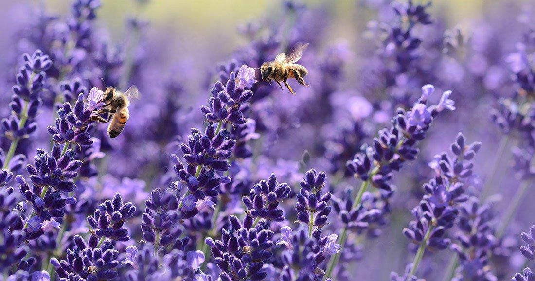 Pourquoi notre survie dépend de la biodiversité