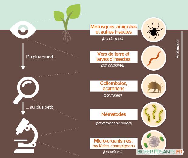 Biodiversité des sols : tout savoir sur son intérêt pour l'agriculture